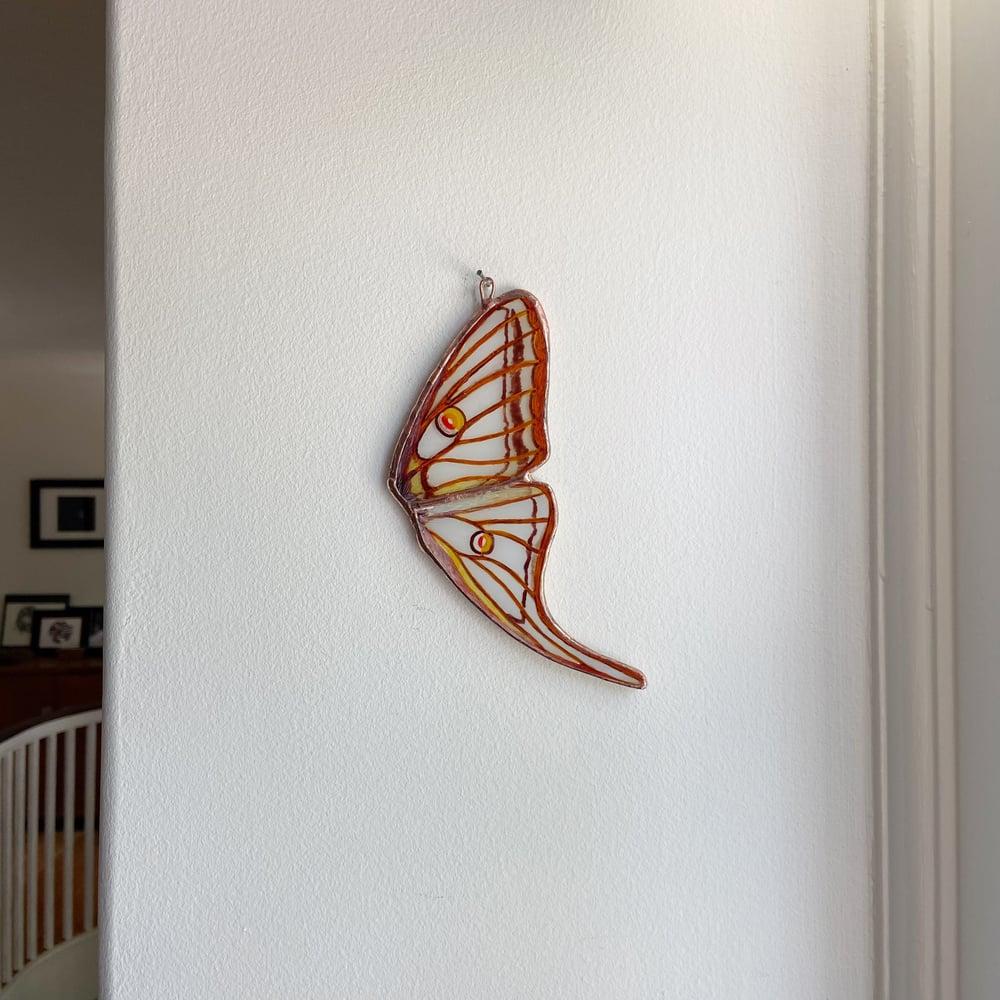 Image of Spanish Moon Moth Wing