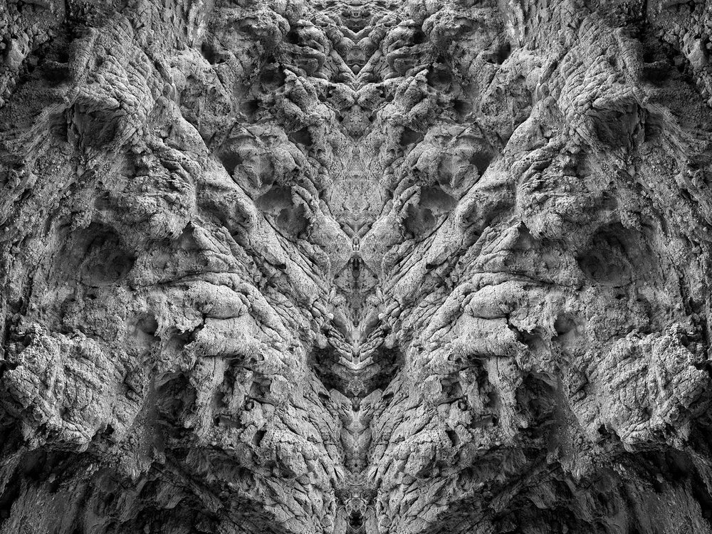 Image of FROZEN FOREST