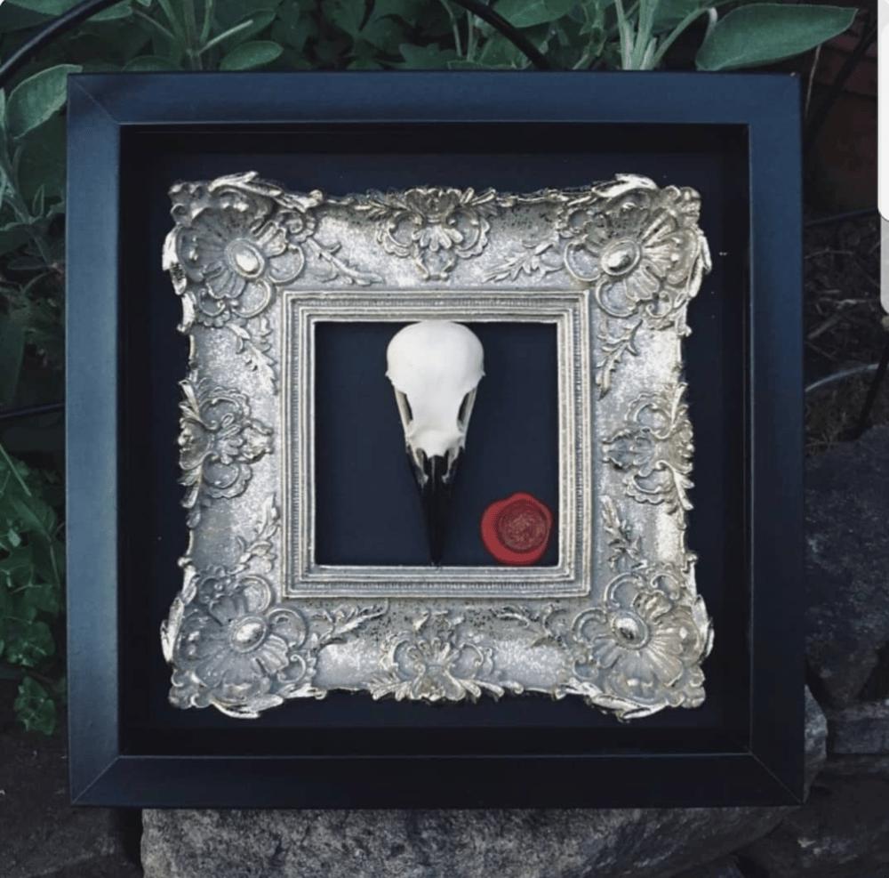 "Image of ""Morrigan"" Ornate Framed Crow Skull"