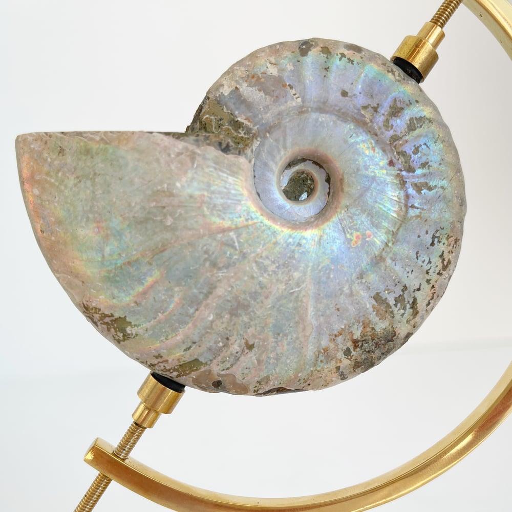 Image of Iridescent Rainbow Ammonite No.69 + Brass Arc Stand