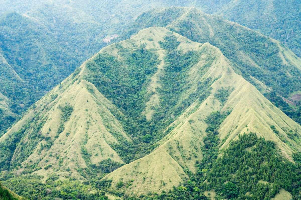 Image of (New) Sumatra- Mandheling FTO