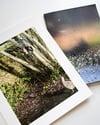 Birds Through My Window / John Darwell / zine & print (2)