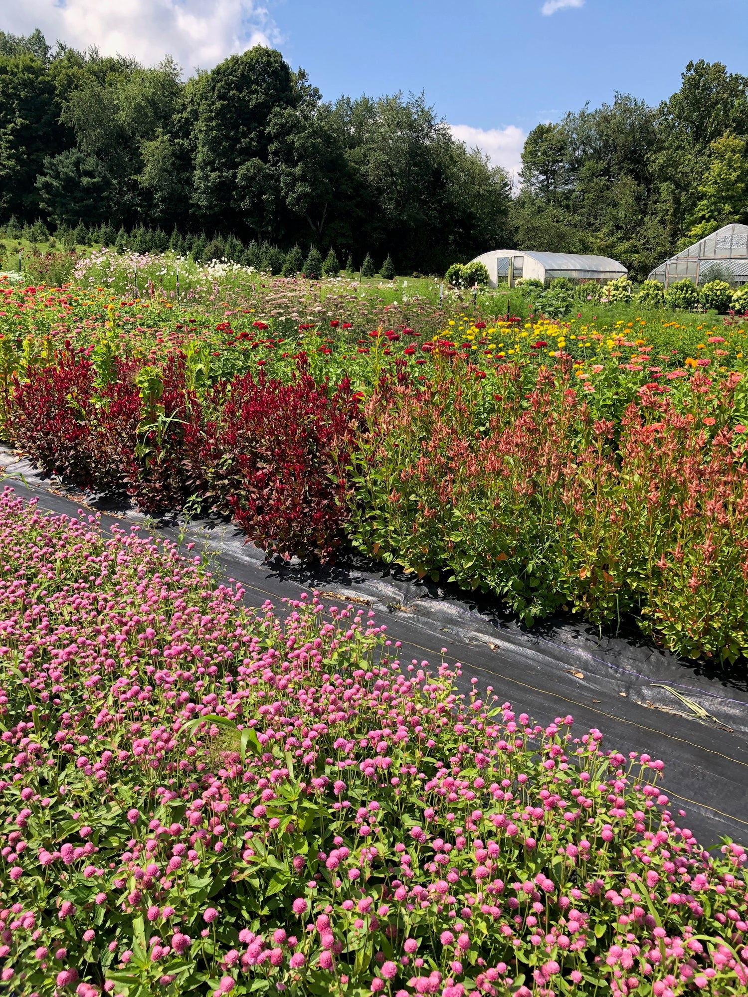 Image of Flower Farm You-Pick Event