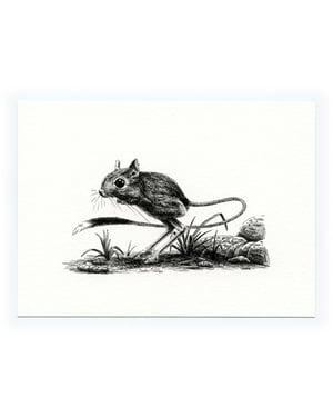Jerboa—Signed Fine Art Print