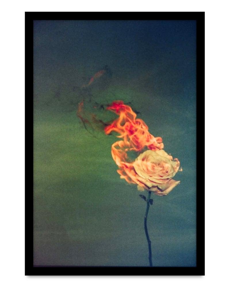 Image of Kate Bellm - 'Burning Rose'. Original artwork 2019