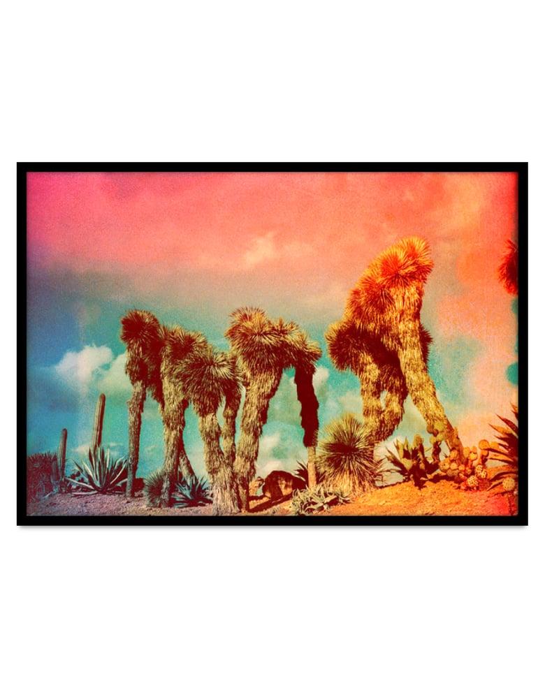 Image of Kate Bellm - 'Yucca'. Original artwork 2016