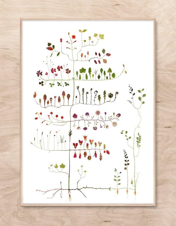 Image of Garden Tree / Trädgårdsträd