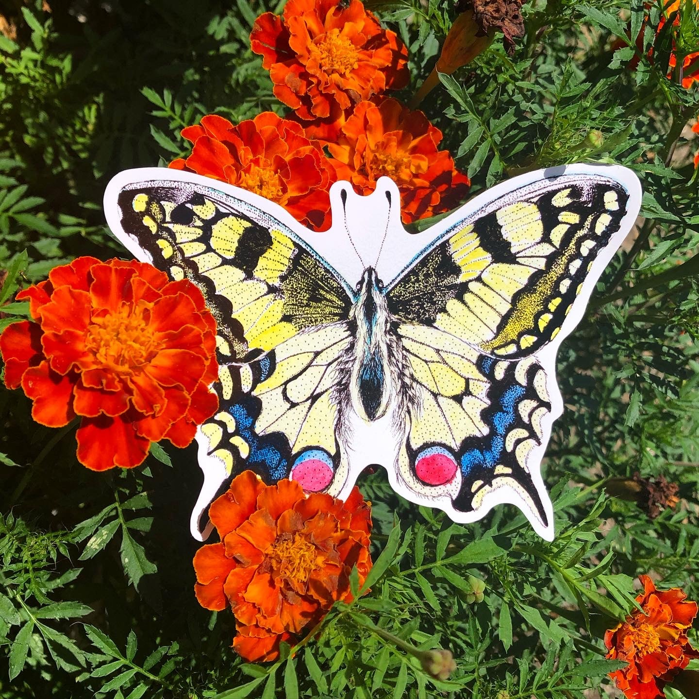 Image of Swallowtail Butterfly Sticker