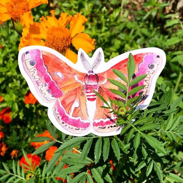 Image of Cecropia Moth Sticker