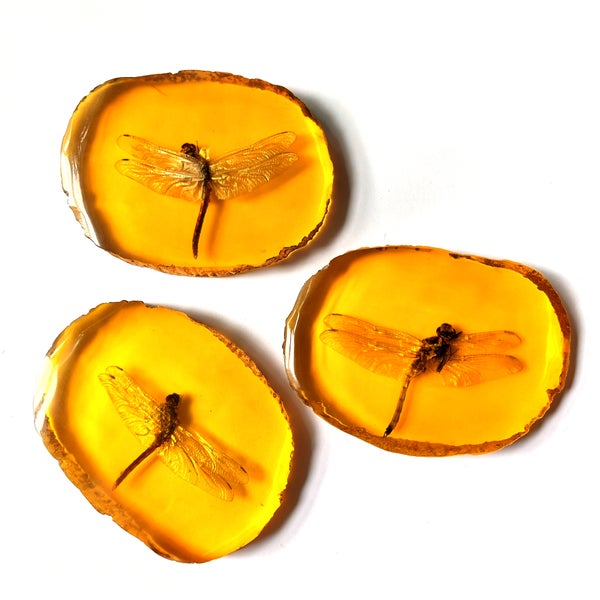 Image of Preserved Dragonfly Resin Slice