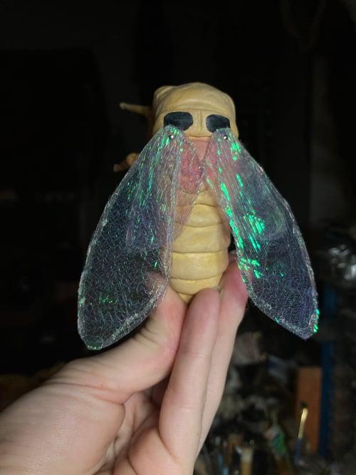 Image of Cicada