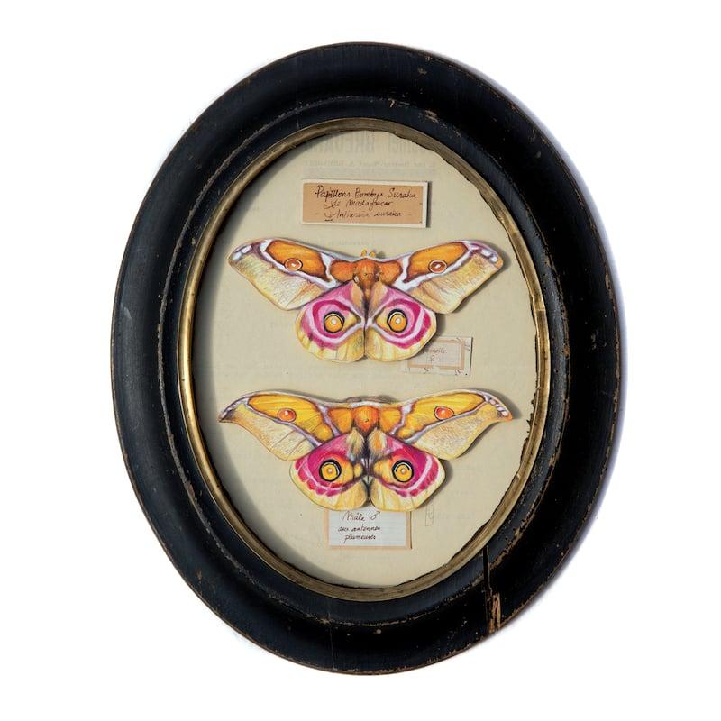 """Image of Papillons - """"Couple de Bombyx Suraka"""" - 18,5 x 24,5 cm"""