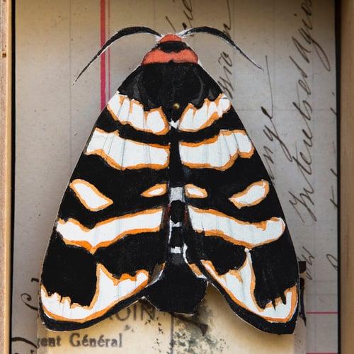 "Image of Papillons - ""Arctia festiva"" 1 - 12 x 18 cm"
