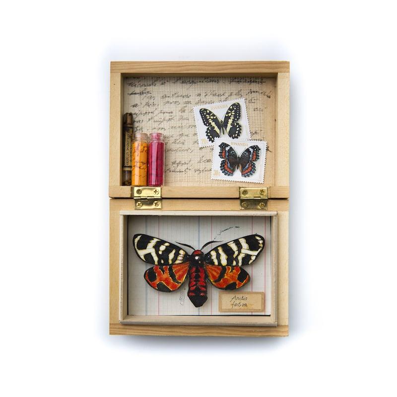 """Image of Papillons - """"Arctia festiva en rouge et jaune"""" - 12 x 17,5 cm"""