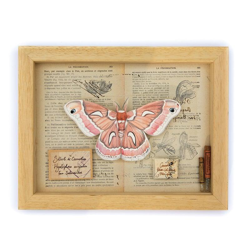 """Image of Papillons - """"Silkoth de Ceanothus"""" - 18 x 24 cm"""