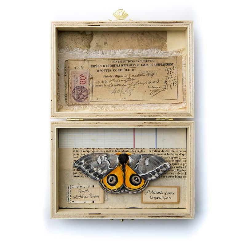 """Image of Papillons - """"Automeris banus"""" - 15 x 21 cm"""