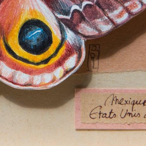 "Image of Papillons - ""Automeris io Femelle"" - 13 x 18 cm"