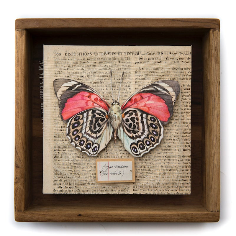 """Image of Papillons - """"Agrias claudina"""" - 20 x 20 cm"""