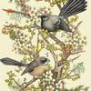 'Piwakawakas and Kanuka, Mt Iron' Print