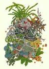 'Otago Skink' Print