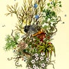 'New Zealand Dotterel' - A3 Print