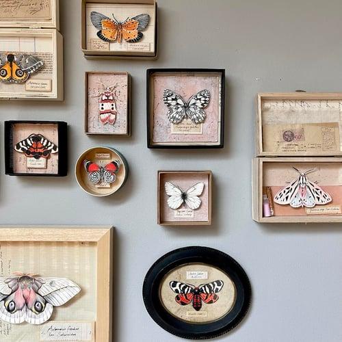 "Image of Papillon - ""Pachydota nervosa"" - 9 x 12 cm"