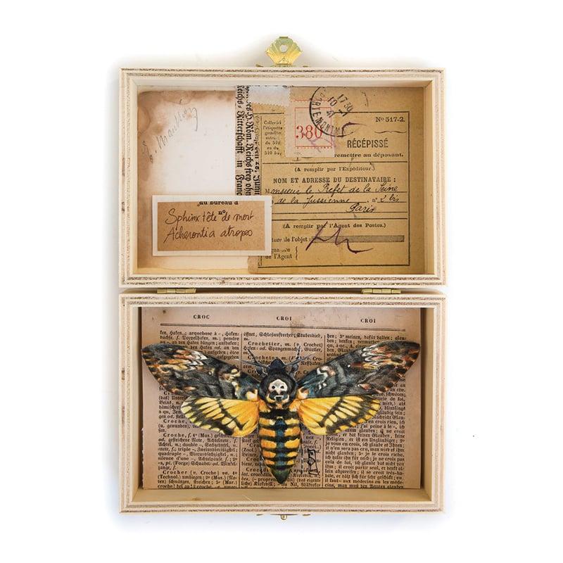 """Image of Papillon - """"Sphinx tête de mort"""" - 15 x 21 cm"""