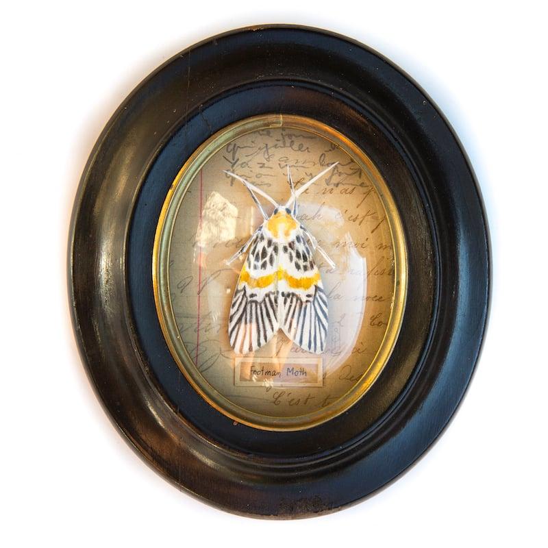 """Image of Papillon - """"Footman Moth"""" - 7,5 x 9 cm"""