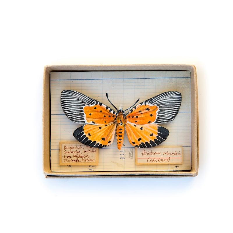 "Image of Papillon - ""Peridrome orbicularis - Ailes ouvertes"" - 9 x 12 cm"