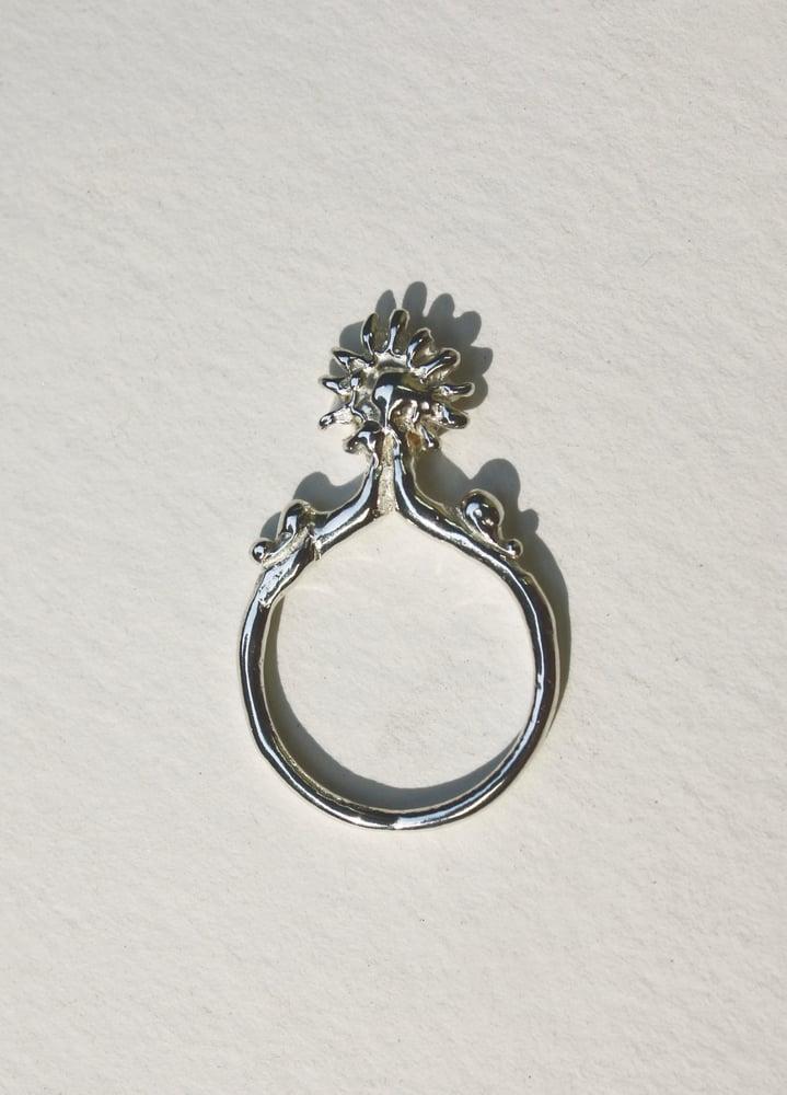 Image of Phoebus Ring