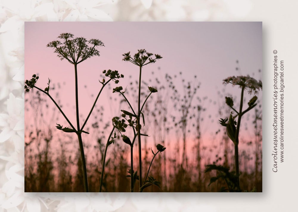 Image of Silhouettes fleuries | carte postale