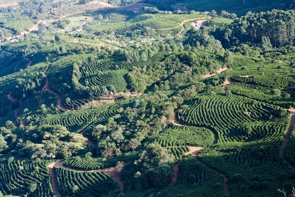 Image of Brazil, Yellow Bourbon, Pulped Natural, 250g