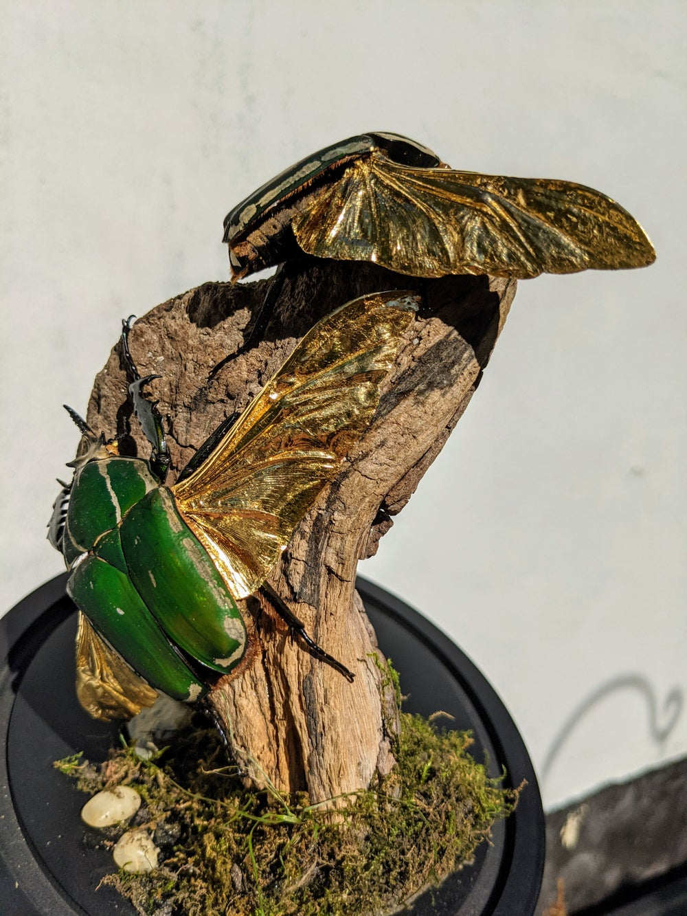 Flower Beetle Dome