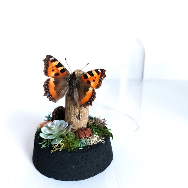 Image of Tortoiseshell Butterfly Woodland Cork Dome