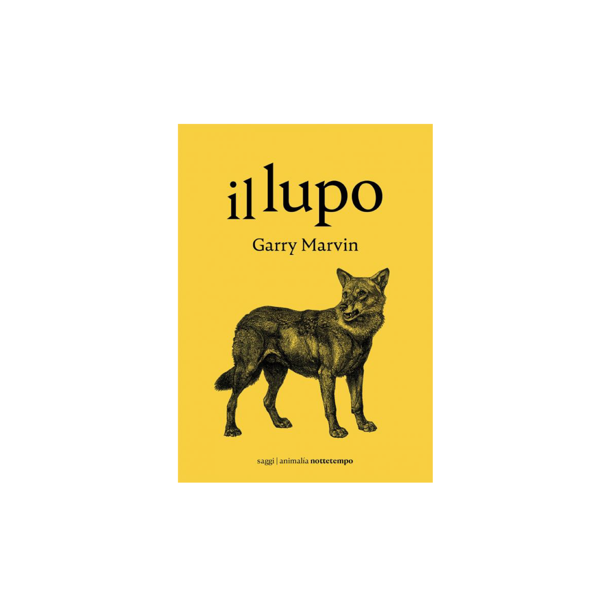 Image of Il lupo