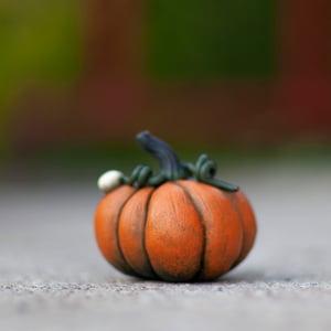 Image of The sweet Pumpkin I