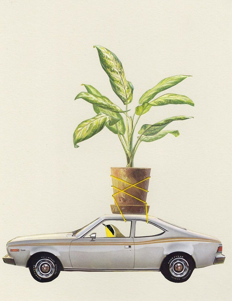 Image of Plant Bandit. Limited edition collage print.