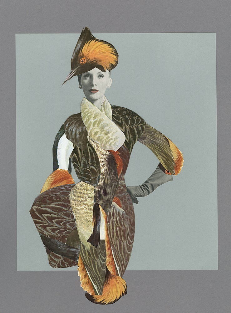 Image of Grèbe élégant. Original paper collage.