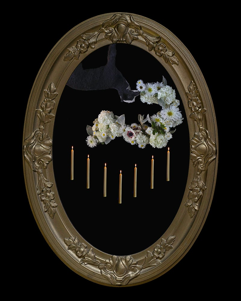 Image of 'Lux Brumalis' in Victorian Bubble Glass Frame