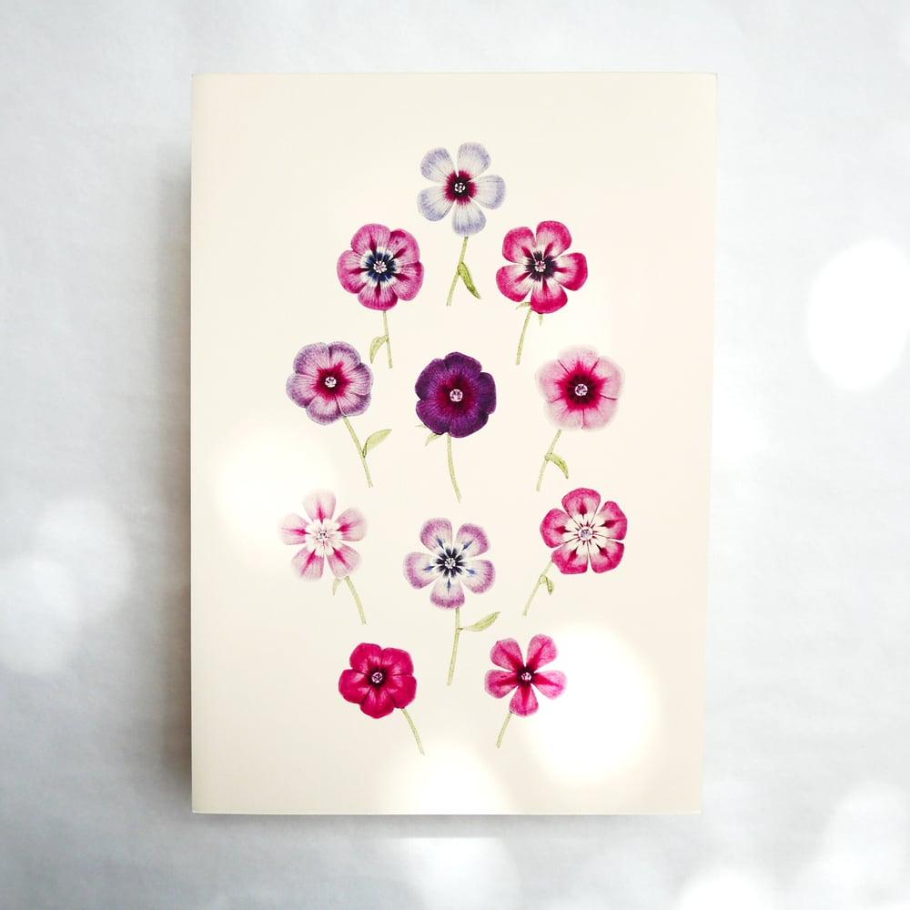Image of Pink Oxalis