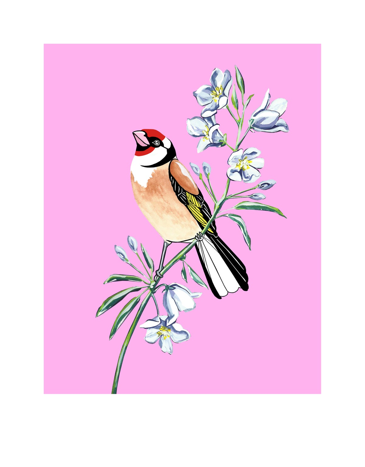 Image of Goldfinch and Bellflower (print)