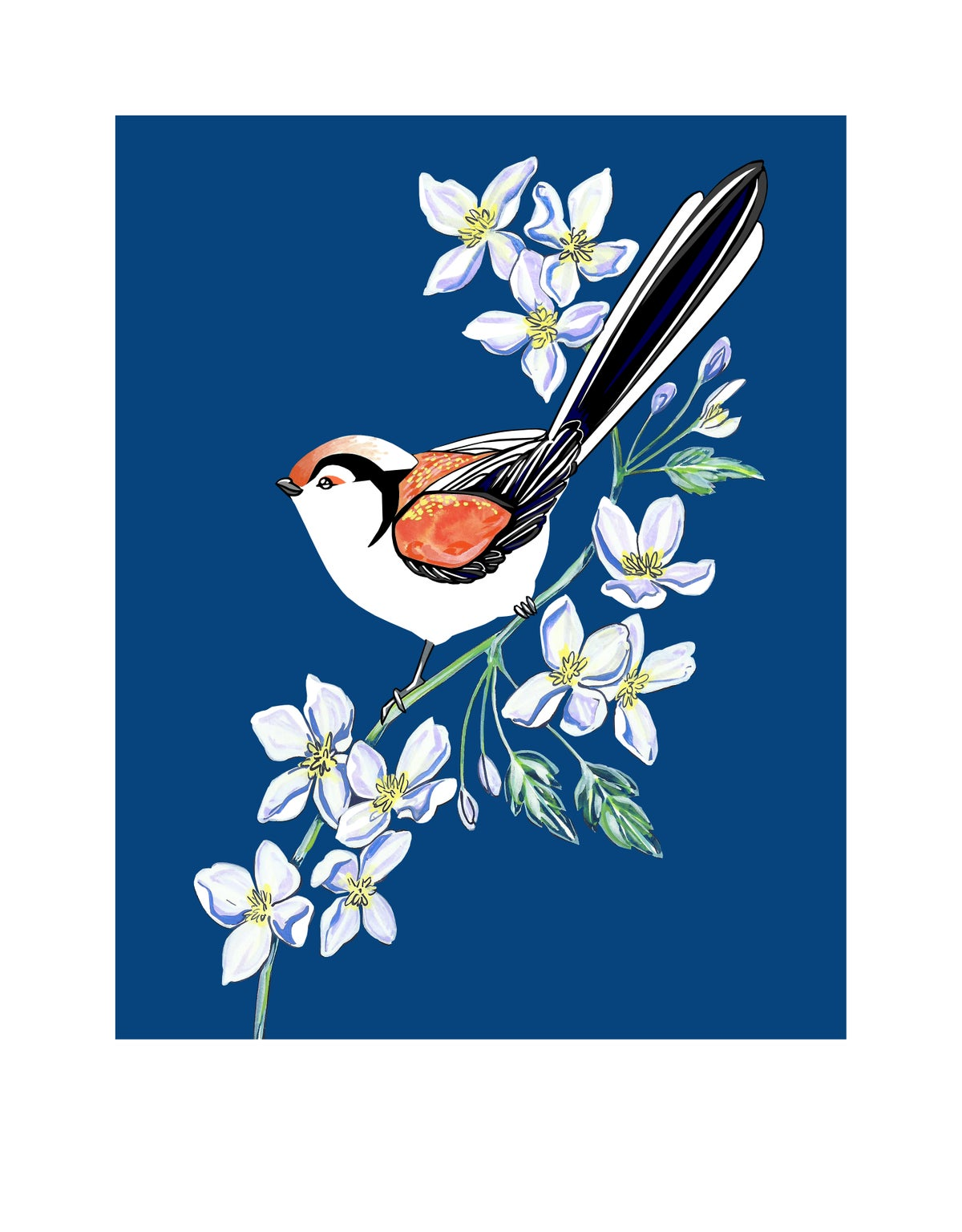 Image of Long Tailed Tit and Clematis (print)