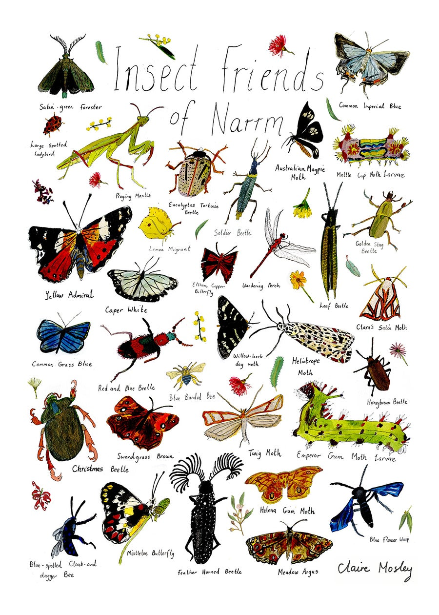 Image of Insect Friends of Narrm