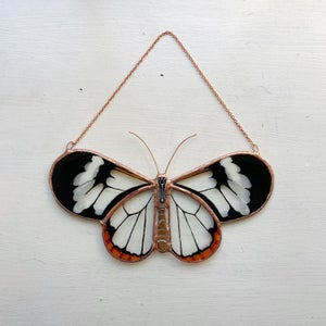 Image of Glasswing Butterfly