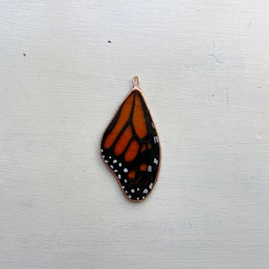 Image of Monarch Butterfly Wing no.8