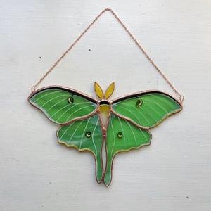 Image of Luna Moth no.3