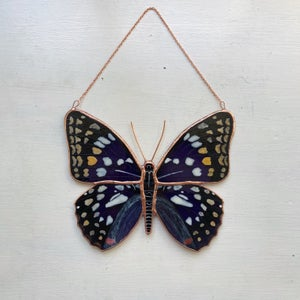 Image of Japanese Emperor Butterfly