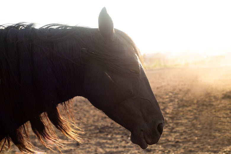 Image of UTE WAR PONY :: Limited Edition Fine Art Metal Print