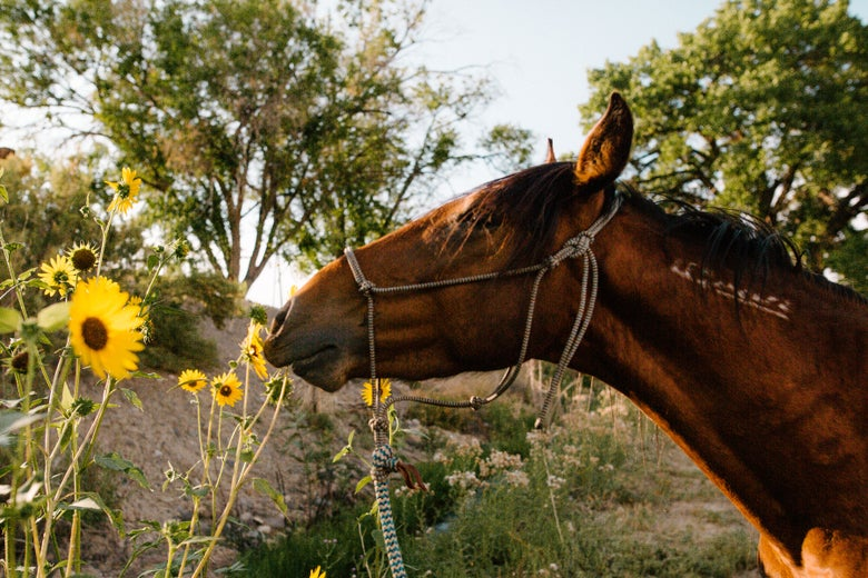 Image of STOP & SMELL THE SUNFLOWERS :: Limited Edition Fine Art Metal Print