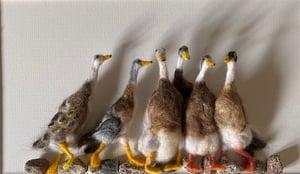 Image of Indian Runner Ducks